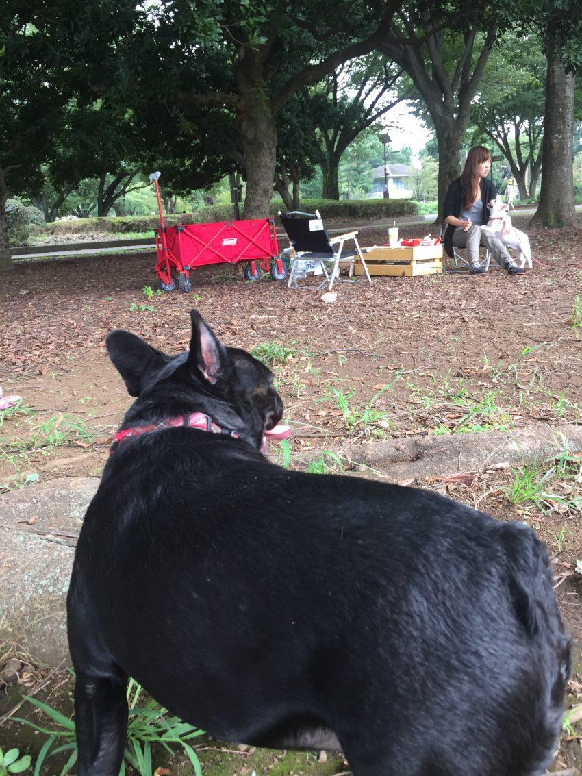 小金井公園でピクニック